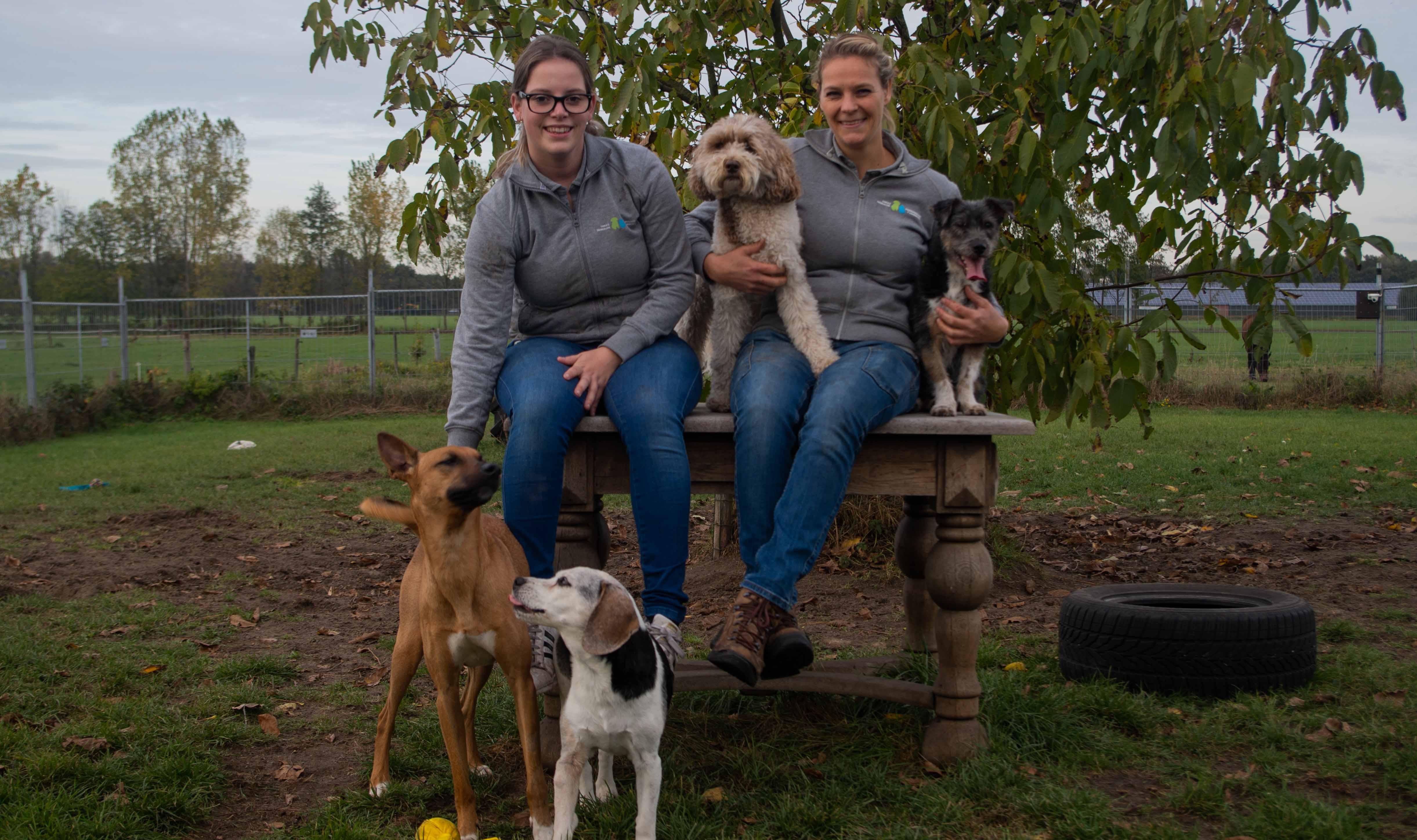 Dierenpension team met honeden