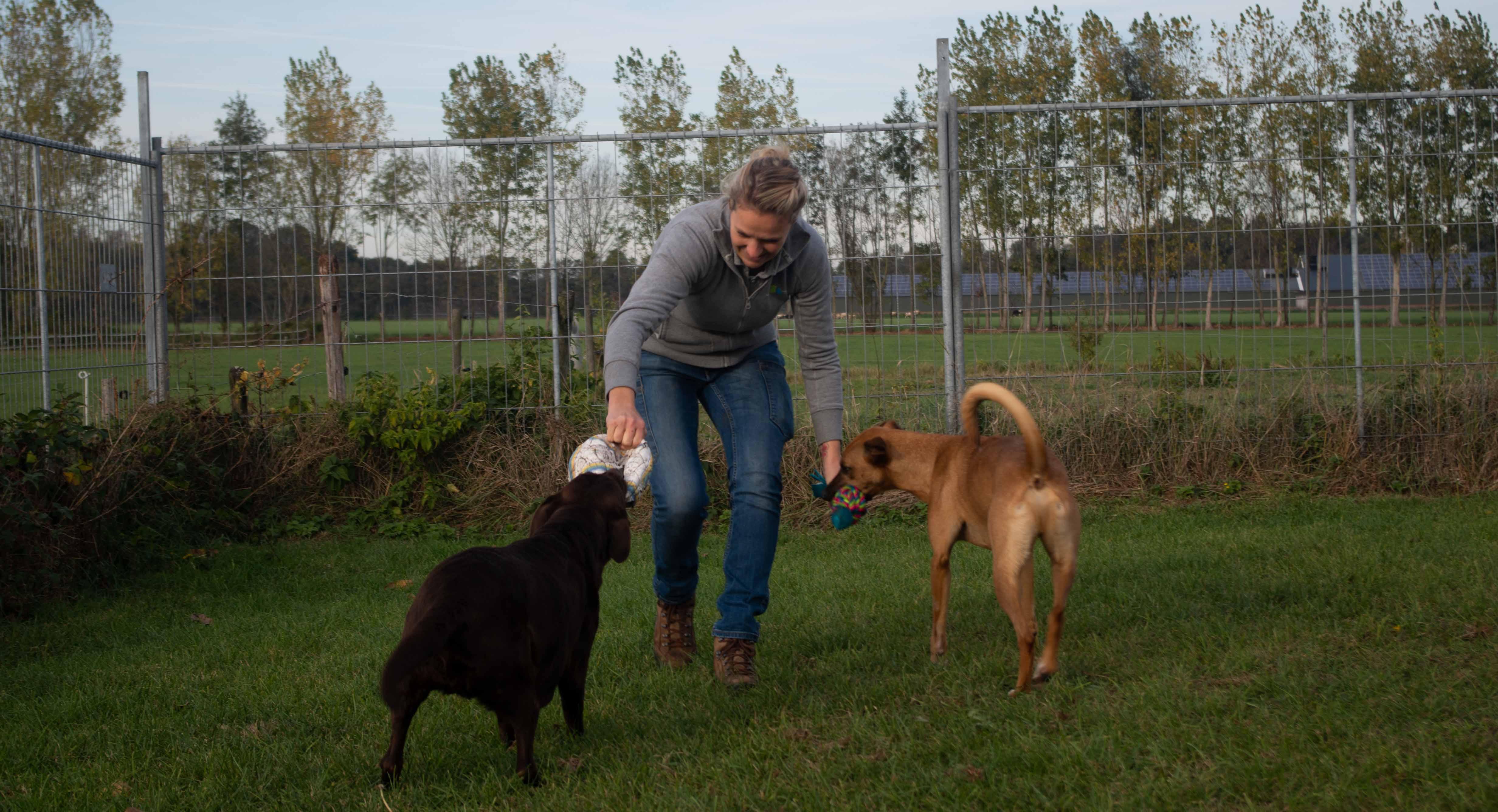Vrouw aan het spelen met 2 honden.