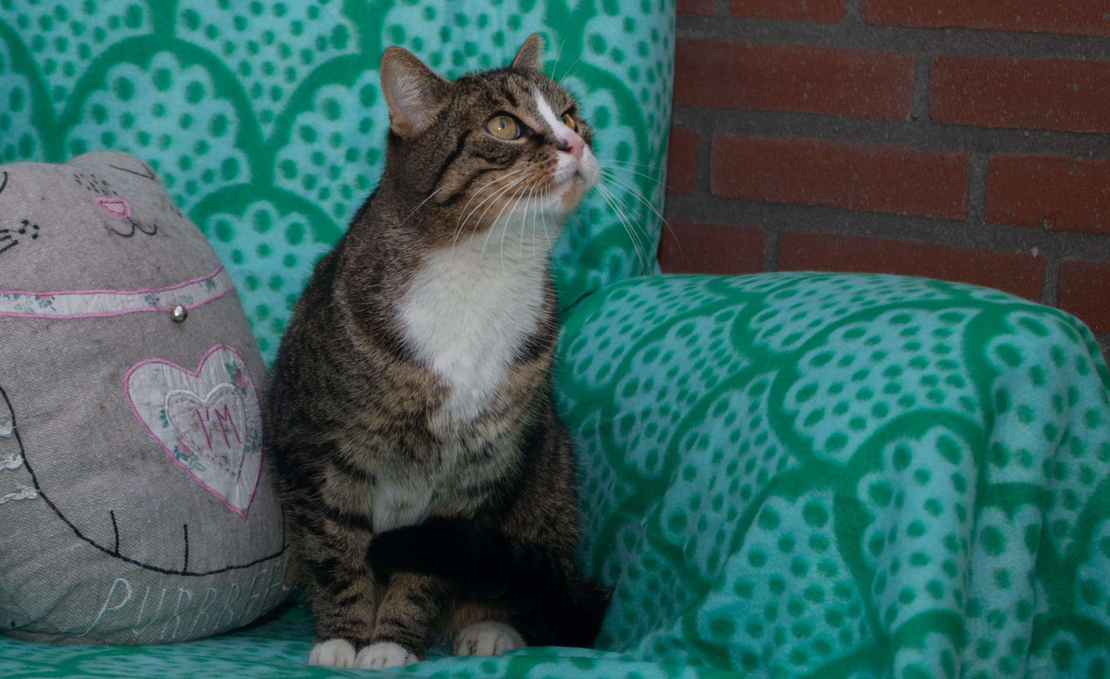 Een kat op een stoel.